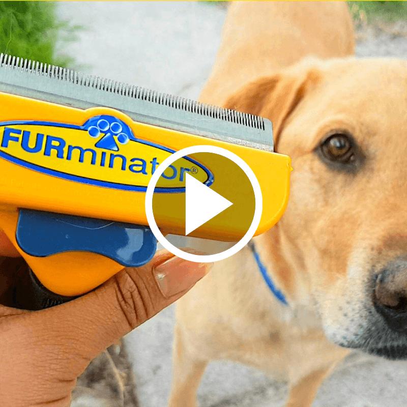 Furminator Video Pawsome Critters
