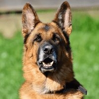 Best Dog Brush - German Shepherds