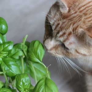 Are herbs poisonous to cats? This cat is sniffing a tasty-looking plant