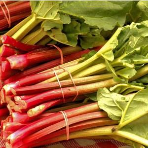 Rhubarb ready for market