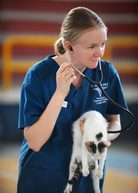 Veterinarian with stethoscope holding kitten