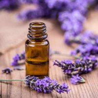 Is Lavender Essential Oil Toxic To Cats?