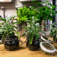 What Houseplants Are Poisonous To Cats?