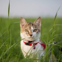 Best Cat Harness No Escape – Take Your Indoor Cat Outdoors