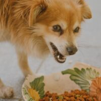 Best Slow Feed Dog Bowl for Better Doggie Digestion