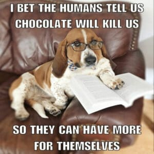 Basset hound sitting on chair with book musing about chocolate.