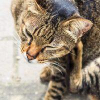 Best Cat Flea Treatment: Feeling Itchy Yet?