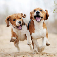 10 Small and Medium Dogs Under 50 Pounds