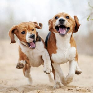10 Dogs Under 50 Pounds