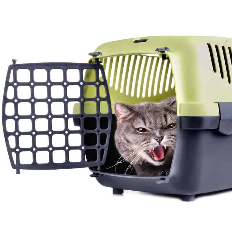 How to Get a Skittish Cat into a Carrier