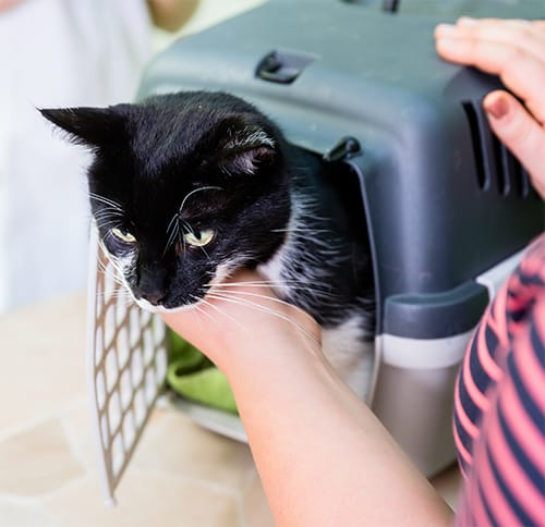 Reassure your cat while opening the carrier