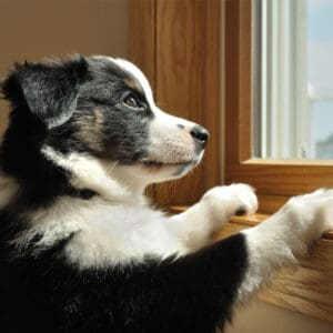 What Causes Separation Anxiety in Dogs?
